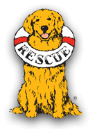 Delaware Valley Golden Retriever Rescue